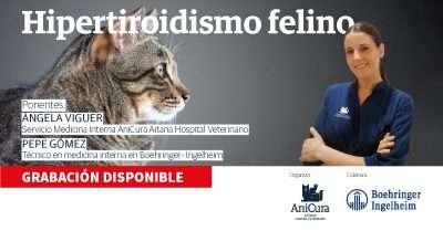 hipertiroidismo felino grabación del webinar disponible online
