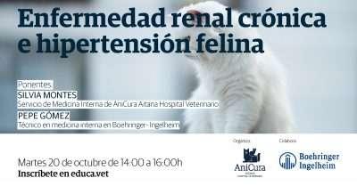 webinar enfermedad renal e hipertensión felina